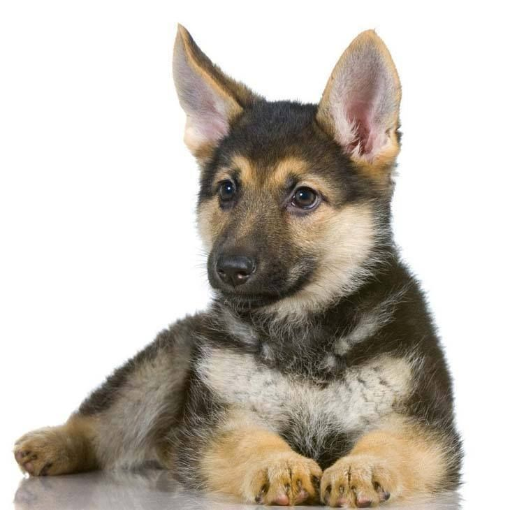 The ultimate German Shepherd names page. Cute male and female names as well suggestions to make your search easy and fun.