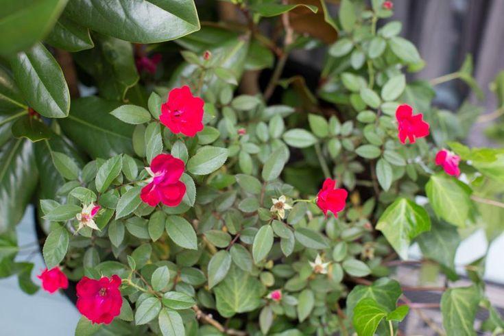 12 nouvelles idées pour décorer votre véranda en automne