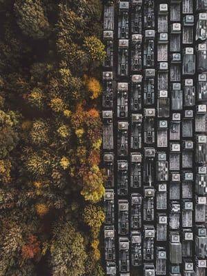 Man Vs Wild (abandoned trucks and autumn trees in Nottingham)