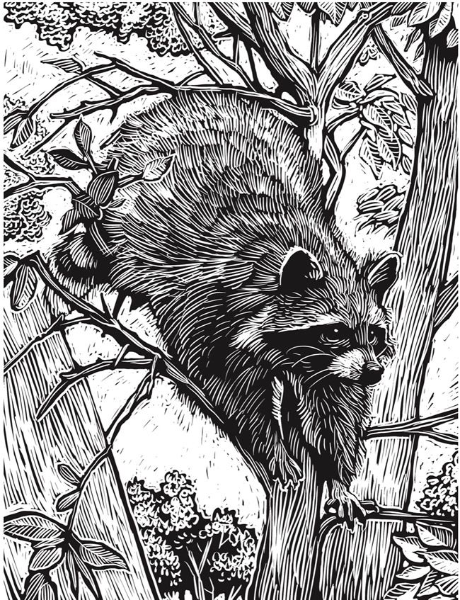 Kea Coloring Book Games Free Download 214 Best Pages Images On Pinterest