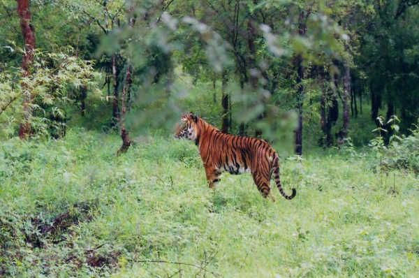Chinnar Wildlife Sanctuary Munnar | Places To Visit in