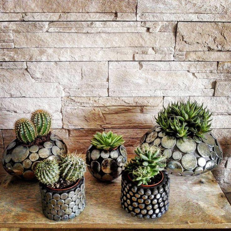 Non vi siete accorti che in giro c'è una vera e propria CACTUS MANIA?!?!?  In tutti i vivai le piante grasse spopolano, le troviamo dentro a...