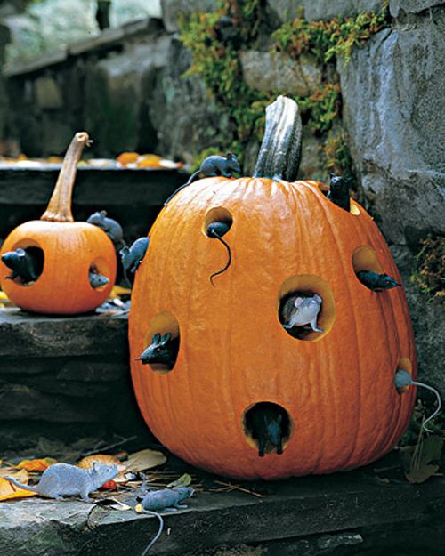 Drill holes in pumpkin, insert mice, some facing out, some tails side out. Looks like they're making a home in the pumpkin.