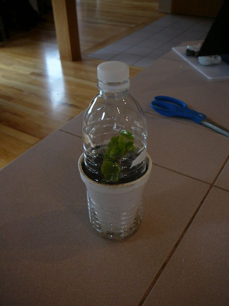 self watering thermal insulated greenhouse for seelings and cuttings using a waterbottle