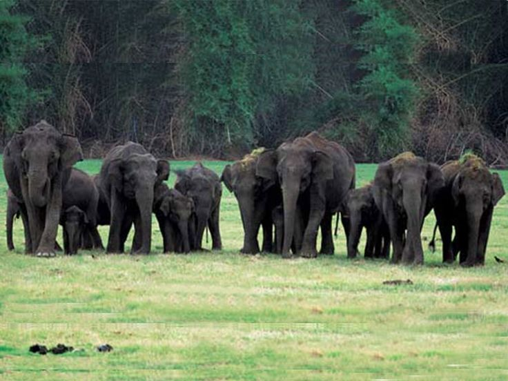 Dandeli Wildlife Sanctuary in Karnataka, India