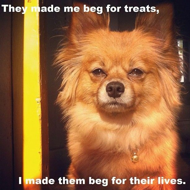 22 best Dogs memes images on Pinterest | Funny animals ...