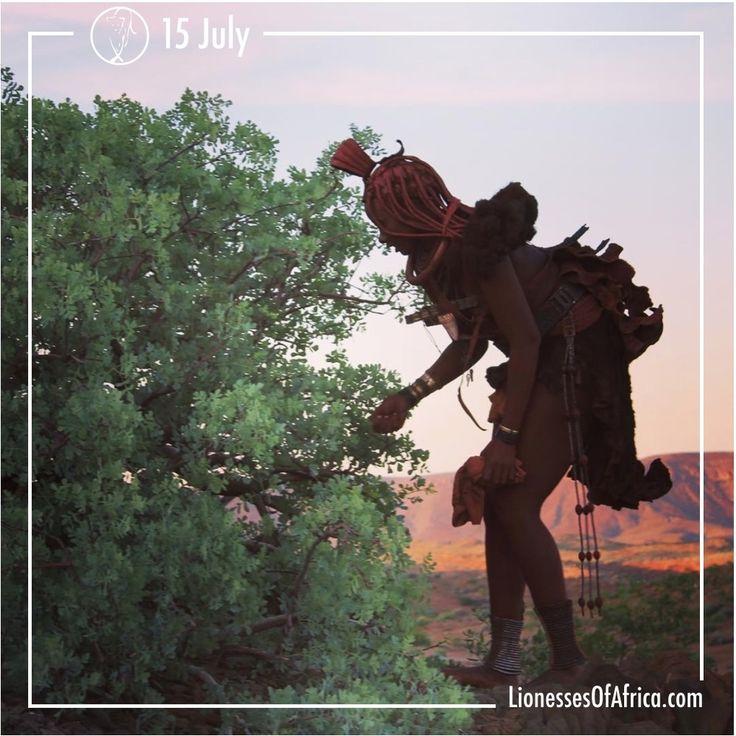 Mbiri http://www.lionessesofafrica.com/image-of-the-day/2016/7/15/mbiri