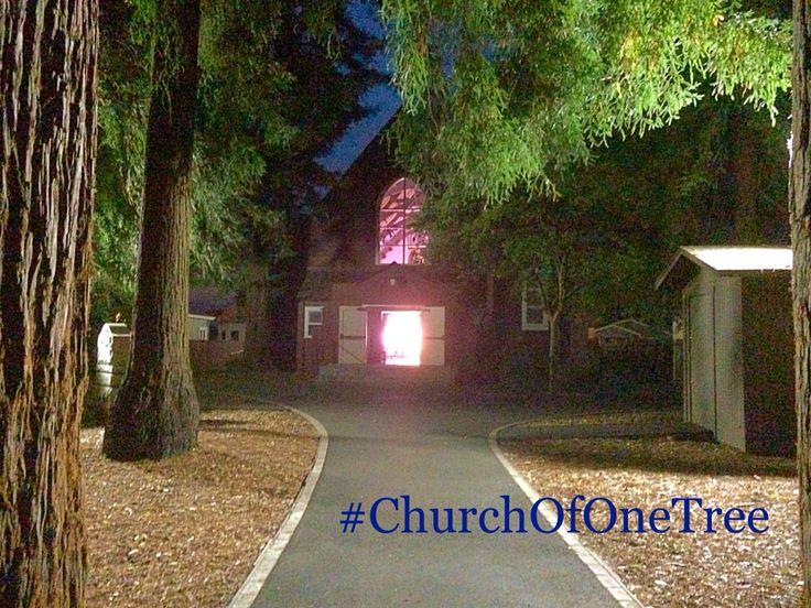 The Church of One Tree. Santa Rosa, CA
