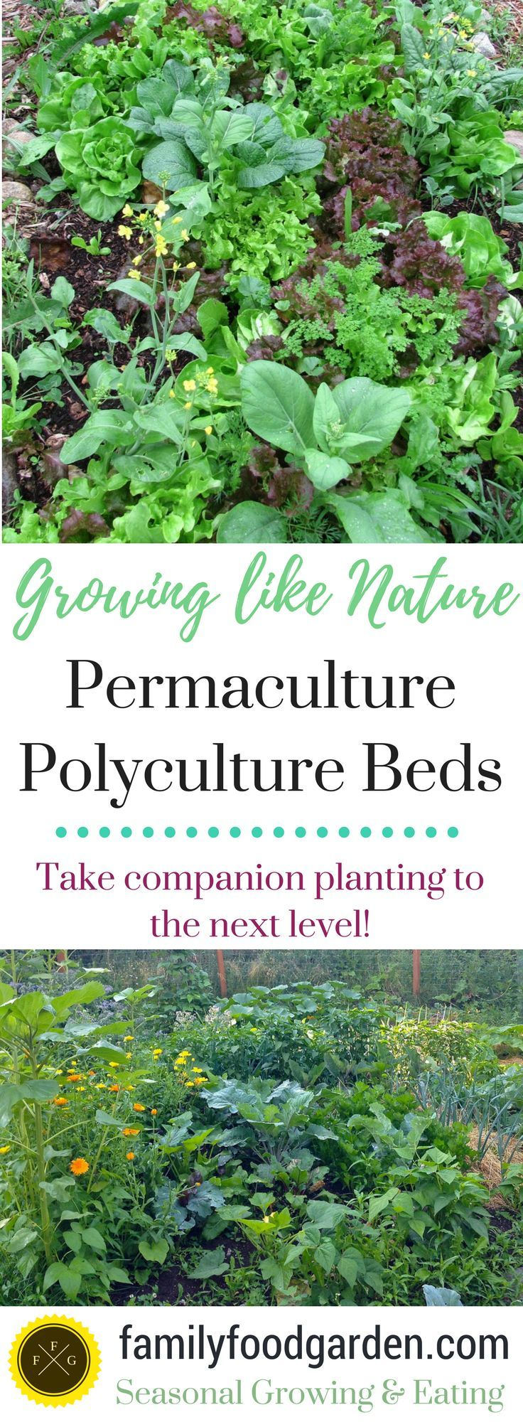 Permaculture Design Examples Google Search: Best 25+ Permaculture Garden Ideas On Pinterest