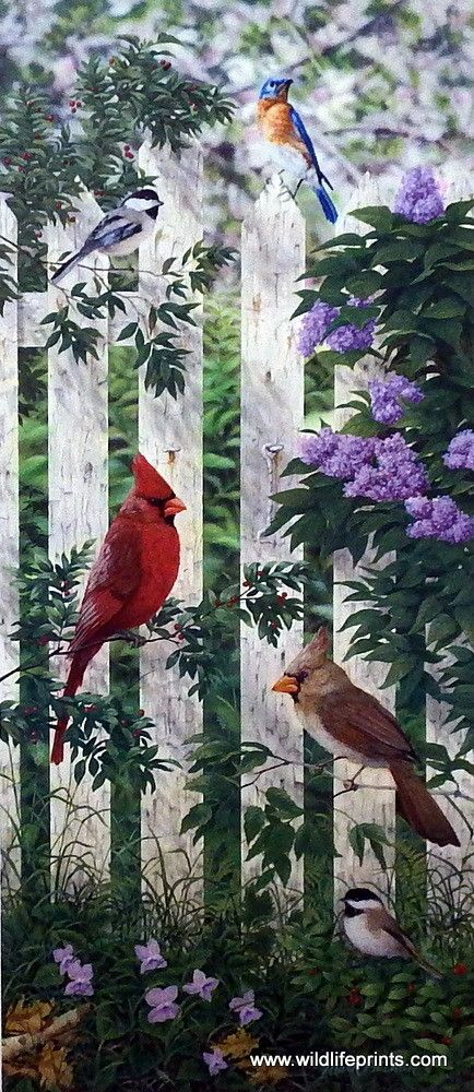 A male and female cardinal, a chickadee and a bluebird hang out on a Picket Fence around a bushel of lilacs in the Mark Daehlin print. This print is signed and numbered and is available unframed in si