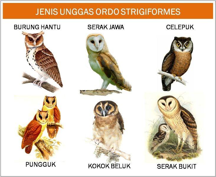 Jenis Macam Gambar Burung Gambar Burung Gambar Hewan Burung