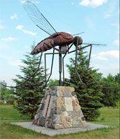 20 curiosità sulle zanzare