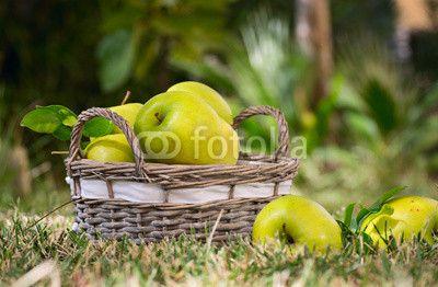 зеленые яблоки в корзинке лежат на траве