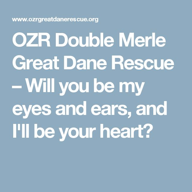 OZR Double Merle Great Dane Rescue – Will you be my eyes and ears, and I'll be your heart?