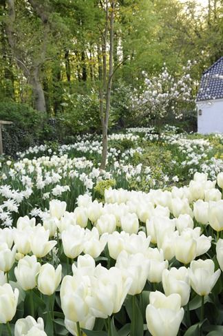 Thinking I need to plant white flowers around the back porch for my moonlight garden.