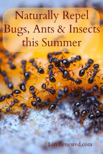 Naturally Repel Bugs, Ants & Insects This Summer at LiveRenewed.com