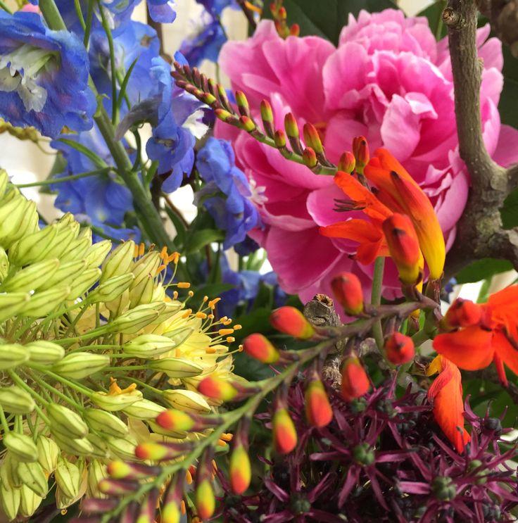 1240 best flowers images on Pinterest  Flower power ...