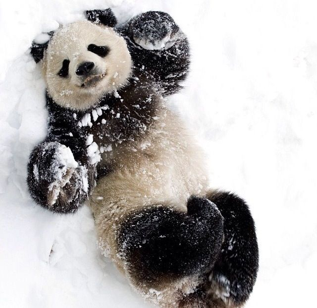 Panda - Page 2 0becaa046692aefed373f367d373bec0