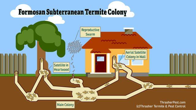Destructive Super Termites Discovered In La Mesa 10news Com Kgtv Tv San Diego Termites Termite Pest Control Termite Control