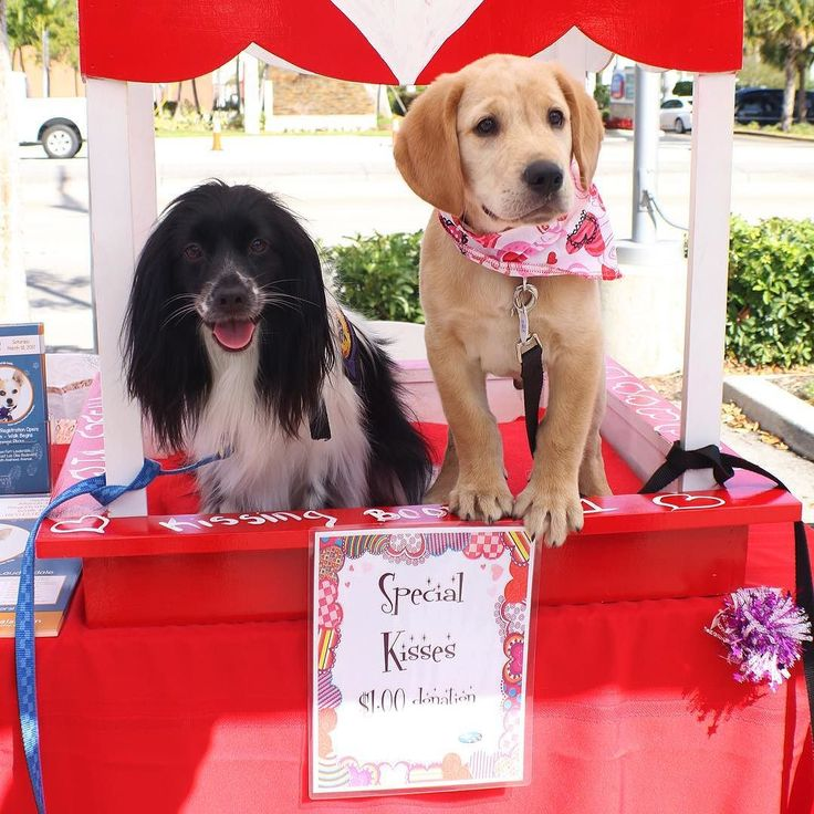 Who wouldn't want to get smooches from these pooches? Donate a dollar and get some puppy lovin'! All donations go to fundraise for our Walk for the Animals! #adoptasweetheart . . . . #hsbcwfta #valentine #cute #cutie #puppy #valentinesday #kiss #smooch #kisses #love #adopt #adoptdontshop #puppies #dog #dogs #dogsofinsta #humanesociety #charity #nonprofit #walk #special #donation #donate #foster