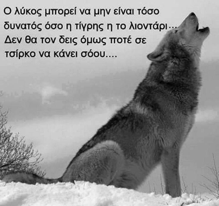 Ο λύκος ...