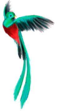 Quetzal Volando Buscar Con Google Ave Quetzal Tattoo Tattoos