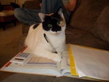Chuy, Cat Genius.