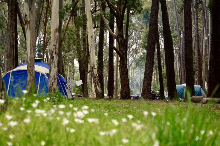 Chookarloo Campground - Kuitpo Forest, South Australia
