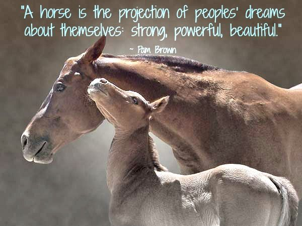 A Horse Is The Projection Of People Dreams About Themselves Strong Powerful Beautiful - Animal Quote