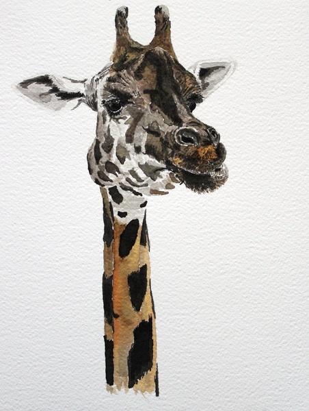 Giraffa camelopardalis by Condor