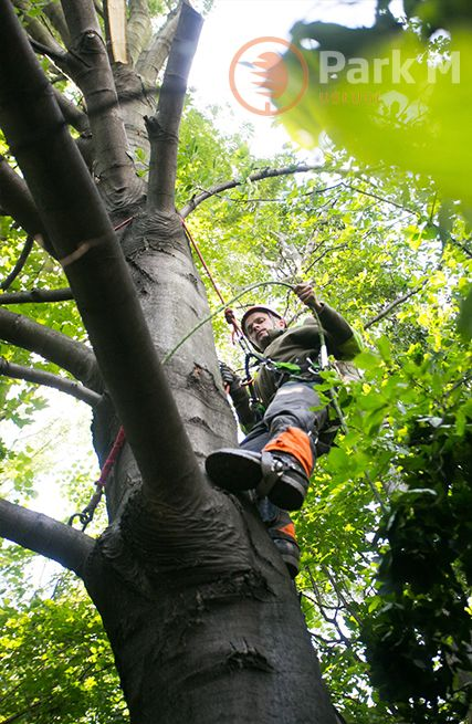 Usługi leśne - specjalistyczna wycinka