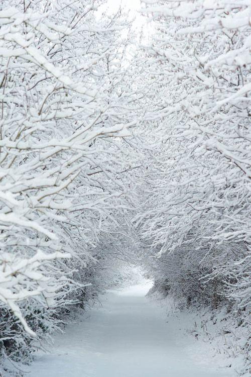 Snow - Snow - Snow