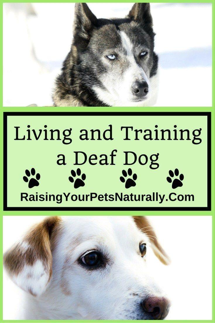 New Dog Training Ideas Click The Picture For Lots Of Dog Care