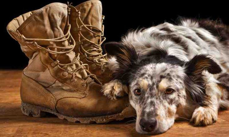 Financial assistance for military families shipping pets overseas | Stripes Europe