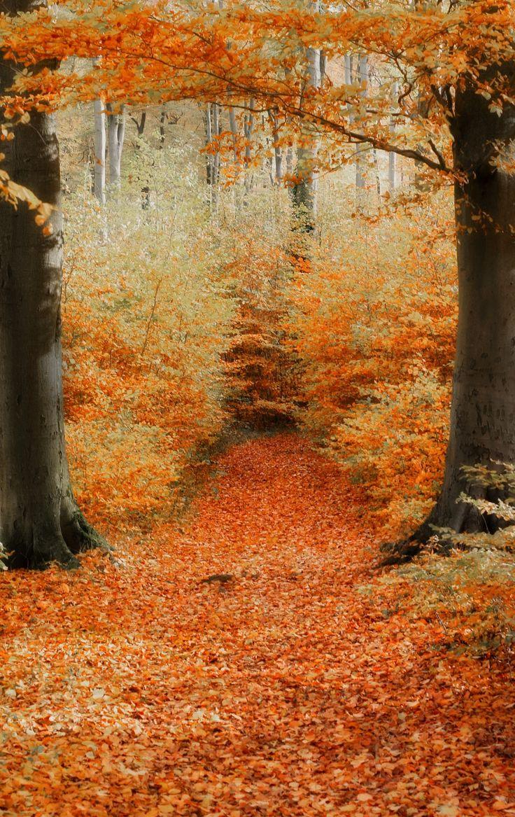 autumn | by Detlef Knapp on 500px