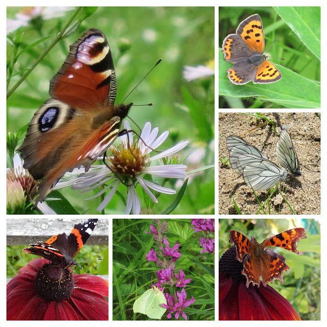 Kuvia neljästä vuodenajasta: Perhoset