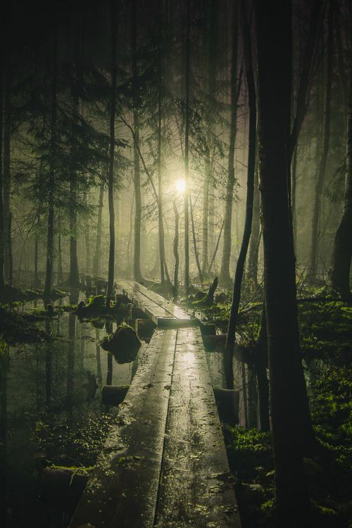 """"""" Pathway by Mikko Lagerstedt on Flickr. """""""