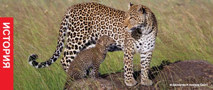 Джонатан и Анджела Скотт: съемка дикой природы
