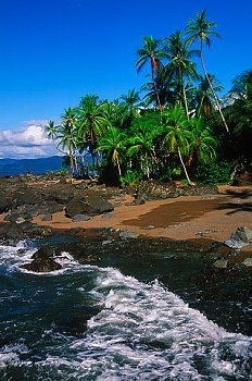 Costa Rica, Corcovado National Park, Surf on Beach with Palm Trees Near Drake Bay