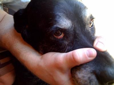 Dog Eye Drops:  ¼ teaspoon of sea salt 1 cup distilled water Add the salt to the water and stir. Keep at room temperature. Apply by either dipping a cotton ball into the solution and squeezing drops into eyes or buy using a glass or plastic dropper. Apply drops until they run out of the eye.