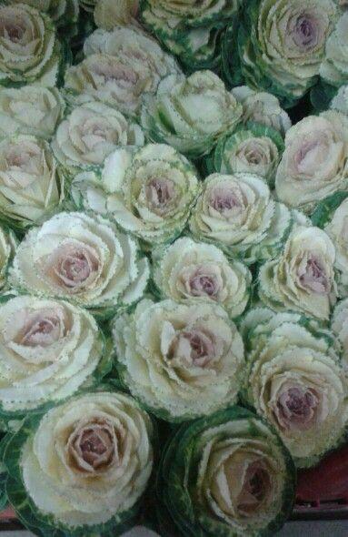 Versatile floral kale.