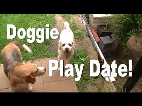 DOGGIE PLAY DATE! http://www.youtube.com/secretlifeofjohn