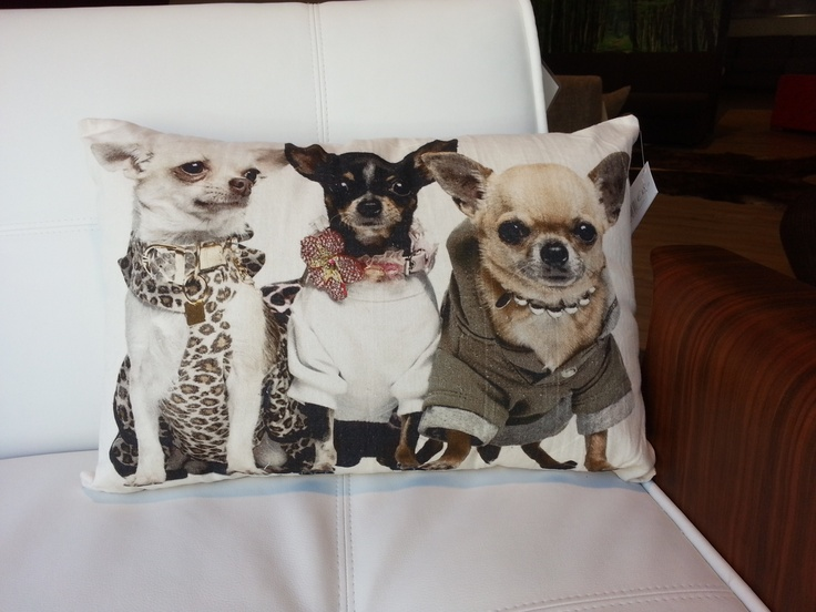 Sierkussen Chihuahuas  50x35cm €18,00