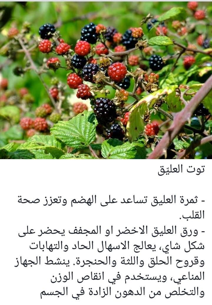 Pin By Abomohammad On نصائح ووصفات خاصة Fruit Blackberry Food