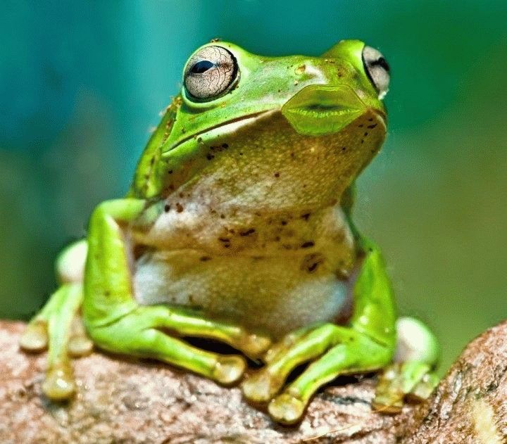 Funny Frog Pictures with Captions | Funny Frog