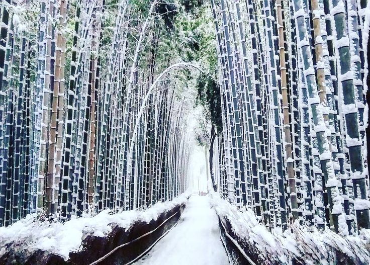 The bamboo forest of Arashiyama takes on a spectral effect. Heavy snow Kyoto winter Japan