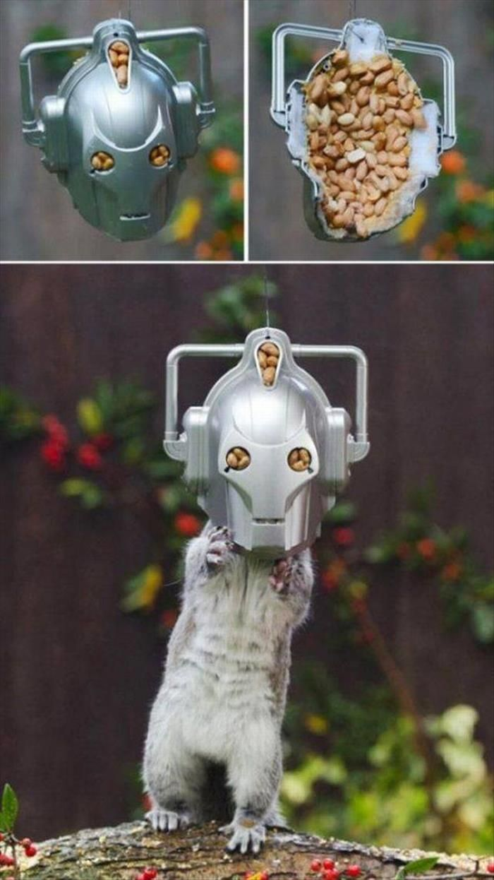 Squirrels will be assimilated.