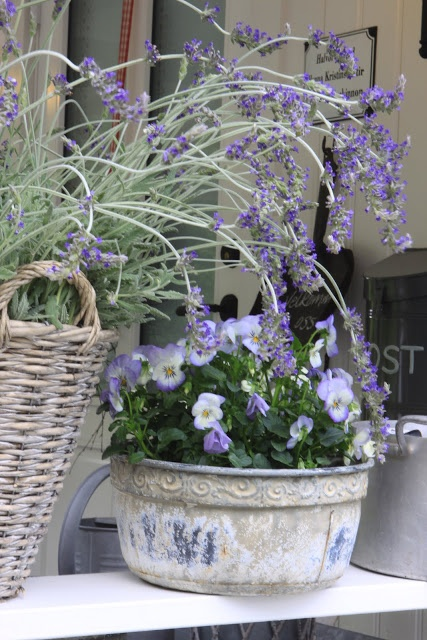 Lavender on a porch...never tried planting lavender in a container. Love this look.