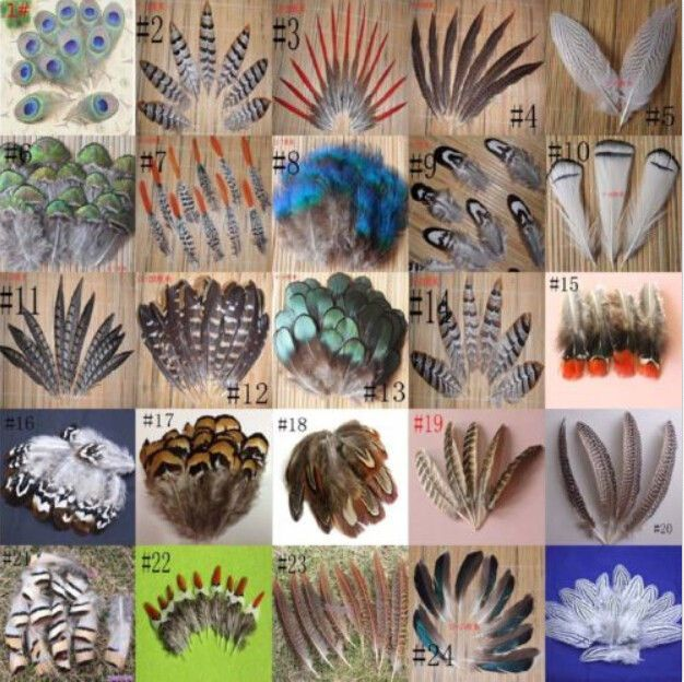 Wholesale 10-100PCS beautiful 2-20cm/2-8inches Pheasant tail & Peacock feathers   | eBay