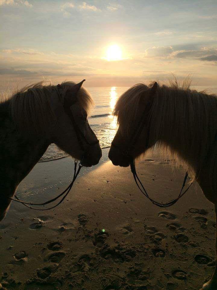 Var det noget med en dejlig tur på hesteryg på Hvidbjerg Strand?